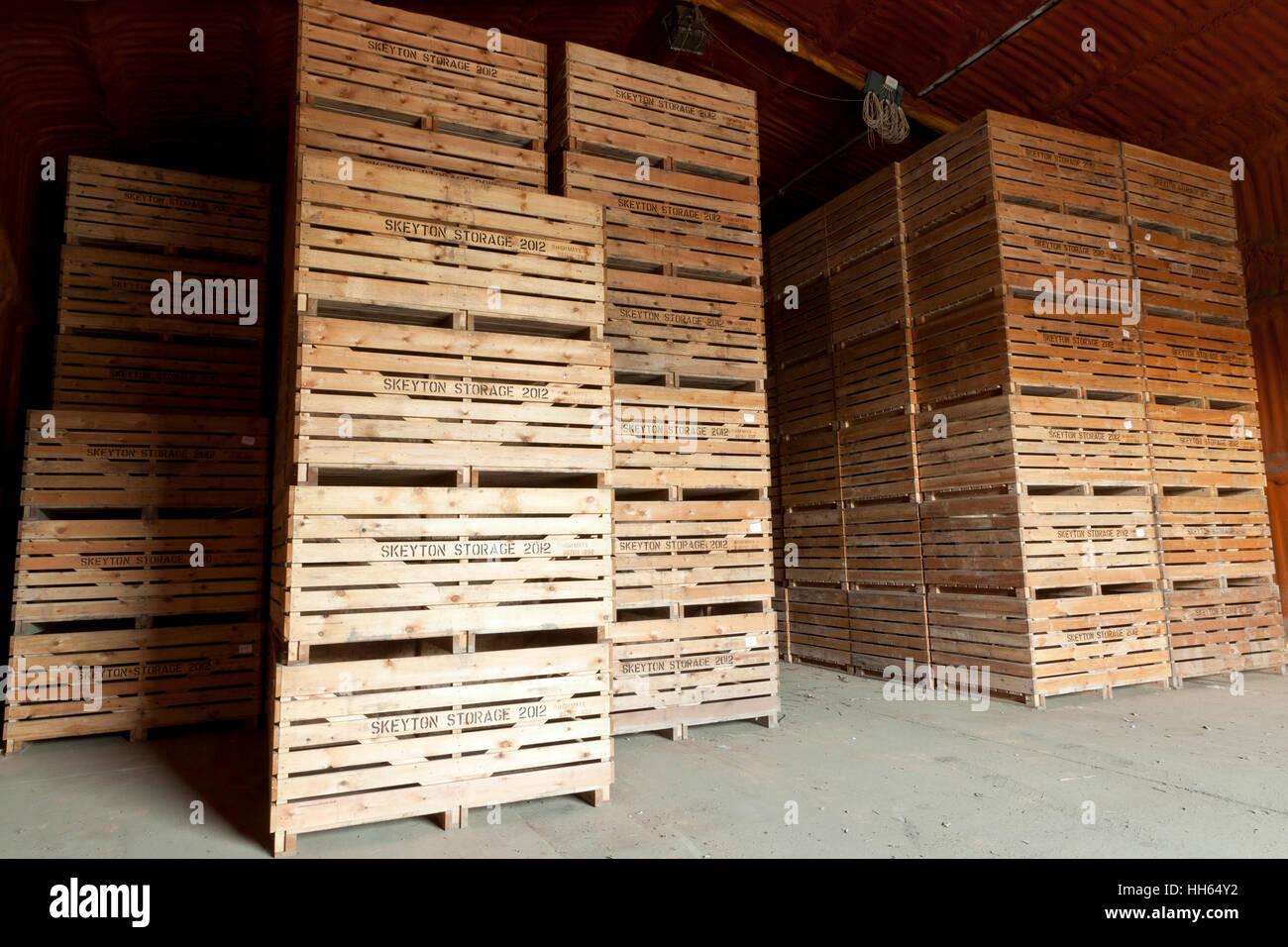 Gestapelte landwirtschaftliche hölzerne Kartoffel Aufbewahrungsboxen in einem isolierten Speicher Stockbild