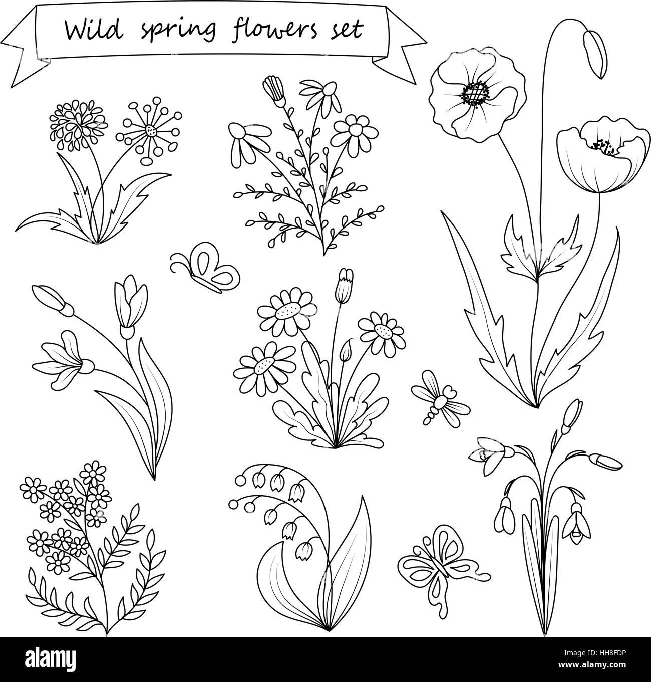 Satz Von Hand Gezeichnet Wilden Fruhlingsblumen Vektor