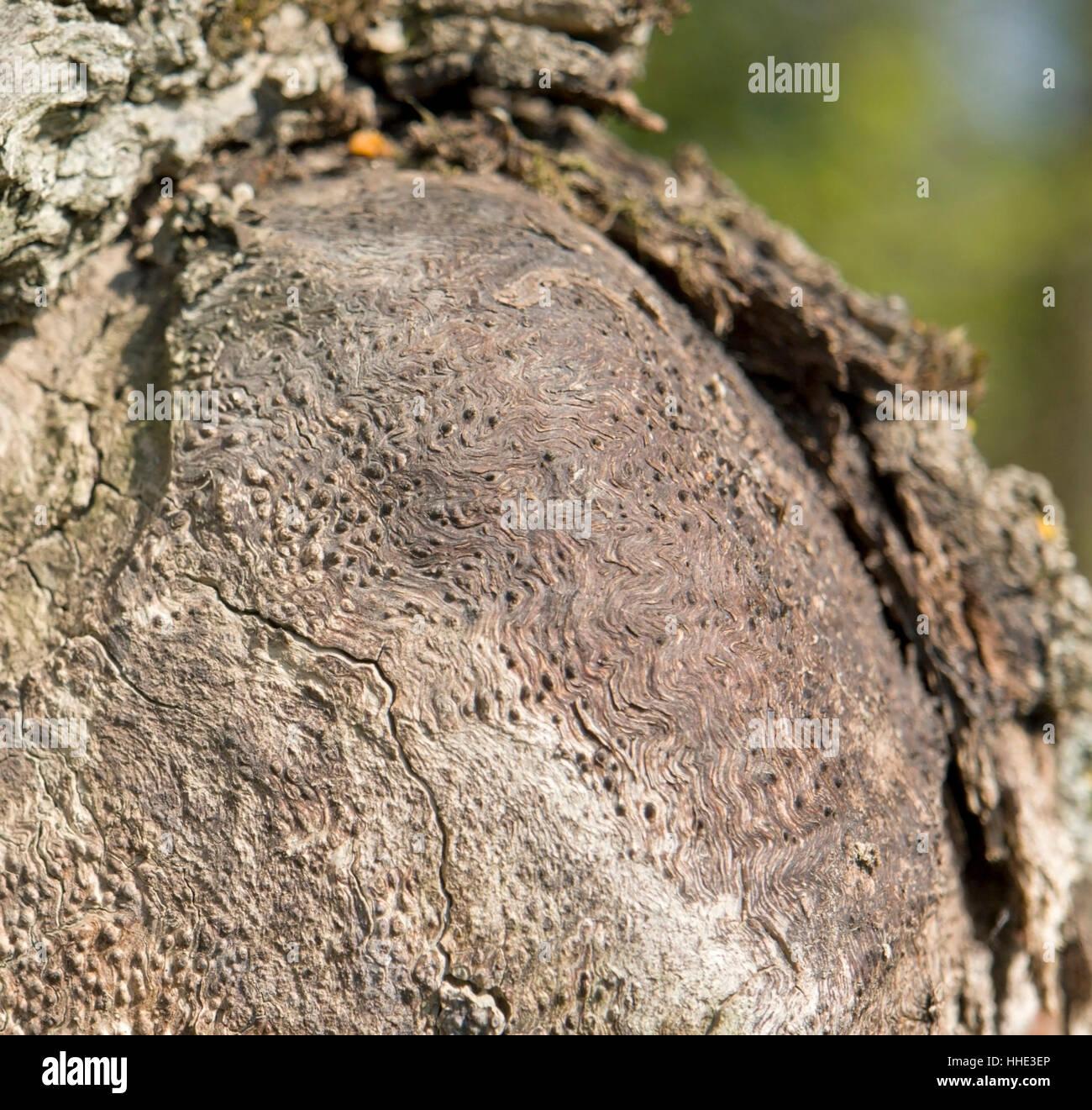 abstrakte zerklüfteten Holz detail Stockbild