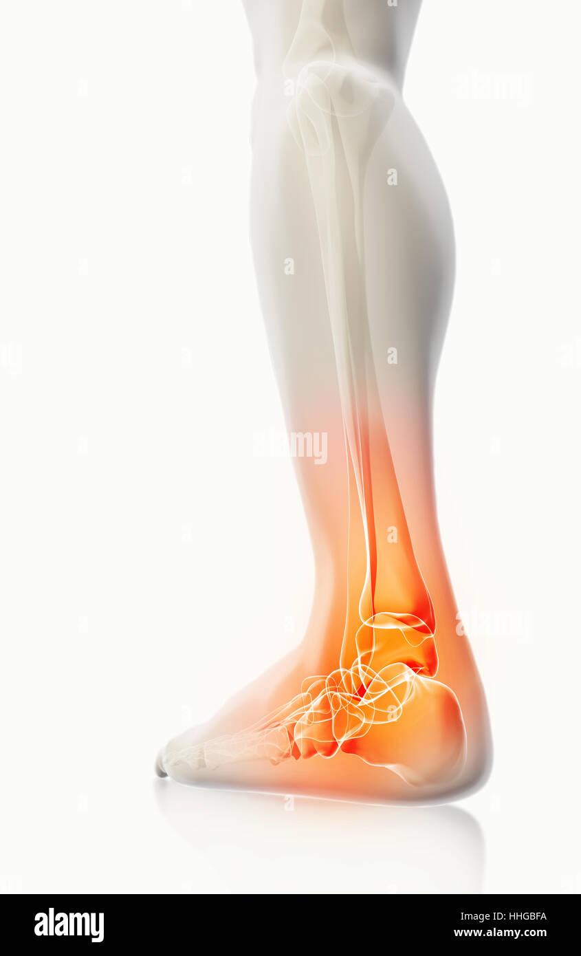 Foot X Ray Stockfotos & Foot X Ray Bilder - Seite 3 - Alamy