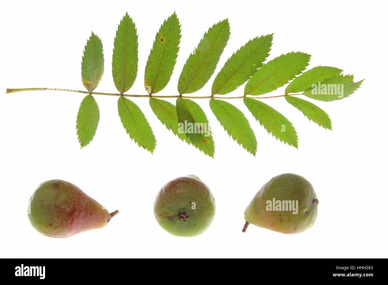 Großartig Früchte Die Blatt Färben Zeitgenössisch - Framing ...