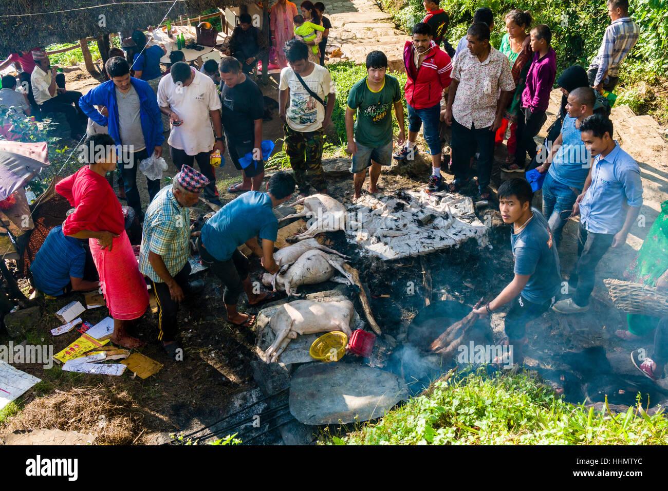 Die Leichen der toten Ziegen, während Darsain hinduistischen Festivals, in kochendem Wasser zubereitet an Gorakhnath Stockbild