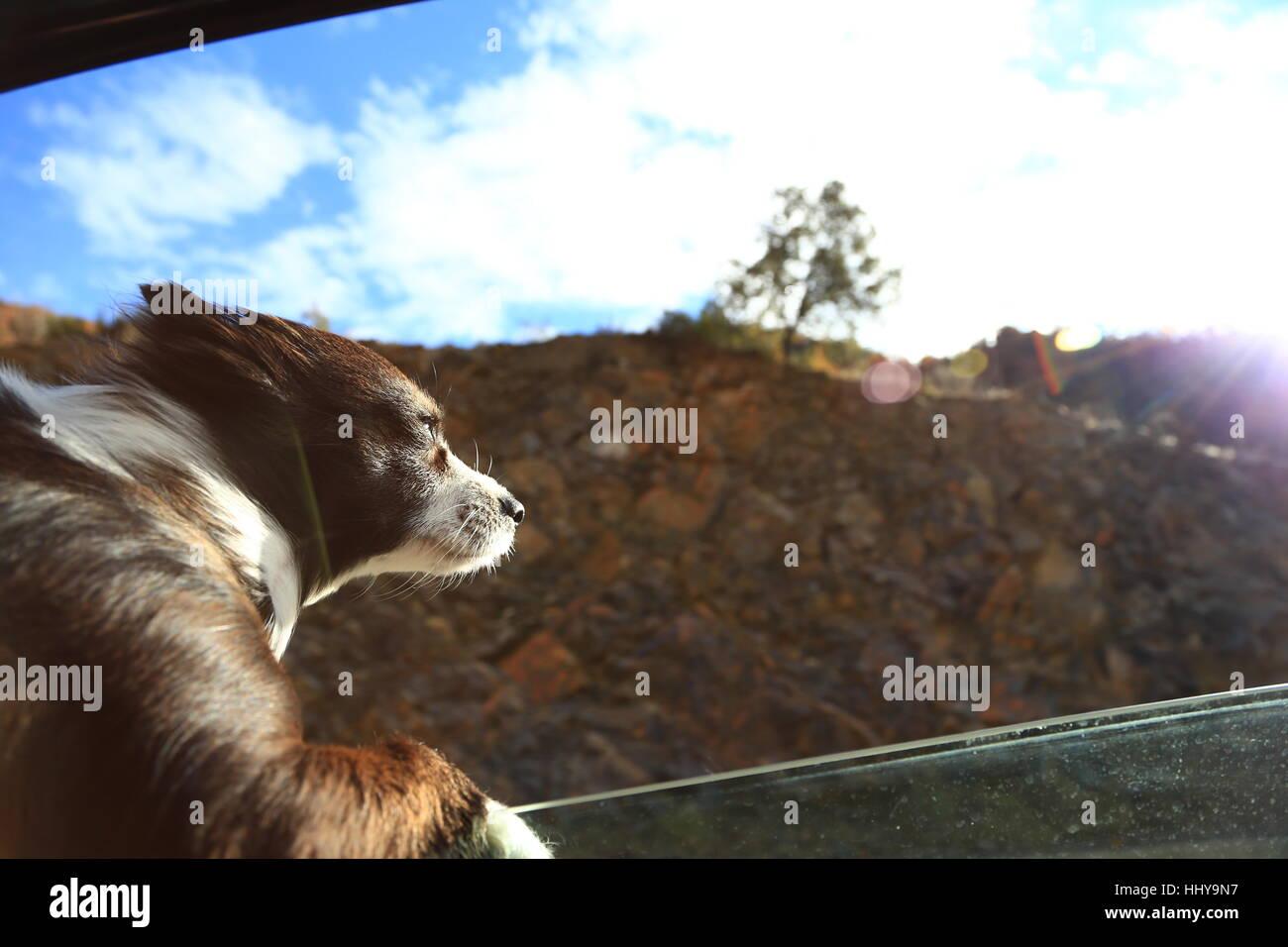 Hund Gefühl frische Luft vor dem Fenster Stockbild