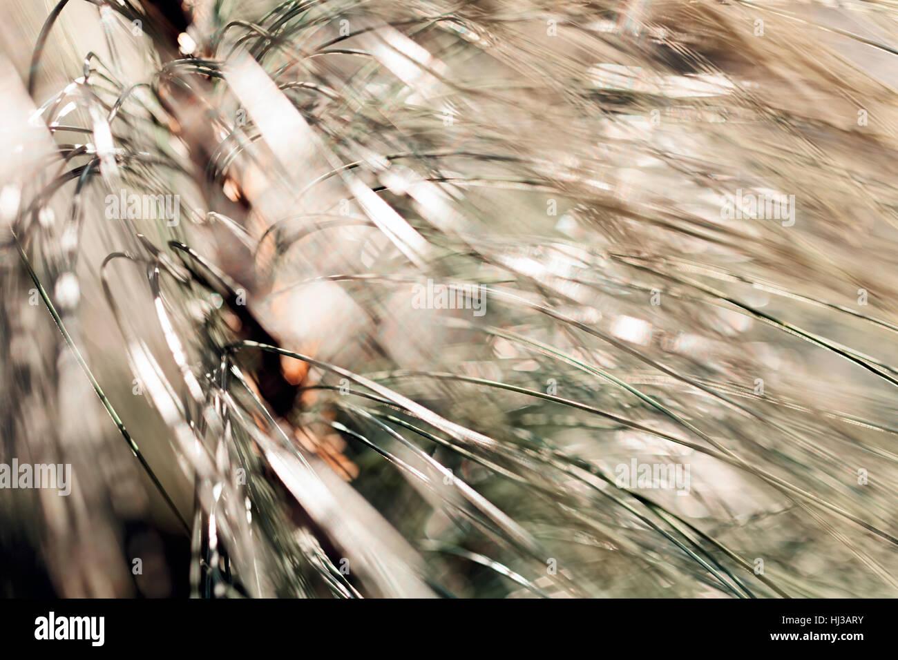 Abstrakt weiß Tannenzweigen, geringe Schärfentiefe Hinweis Stockbild