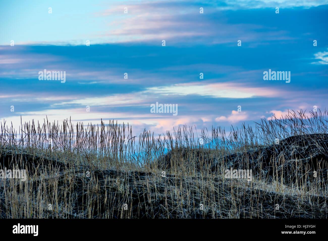 Ein grasbewachsenen Sumpf an einem Hang in Island gerahmt gegen einen Pastell Sonnenuntergang wie am ersten Tag Stockbild