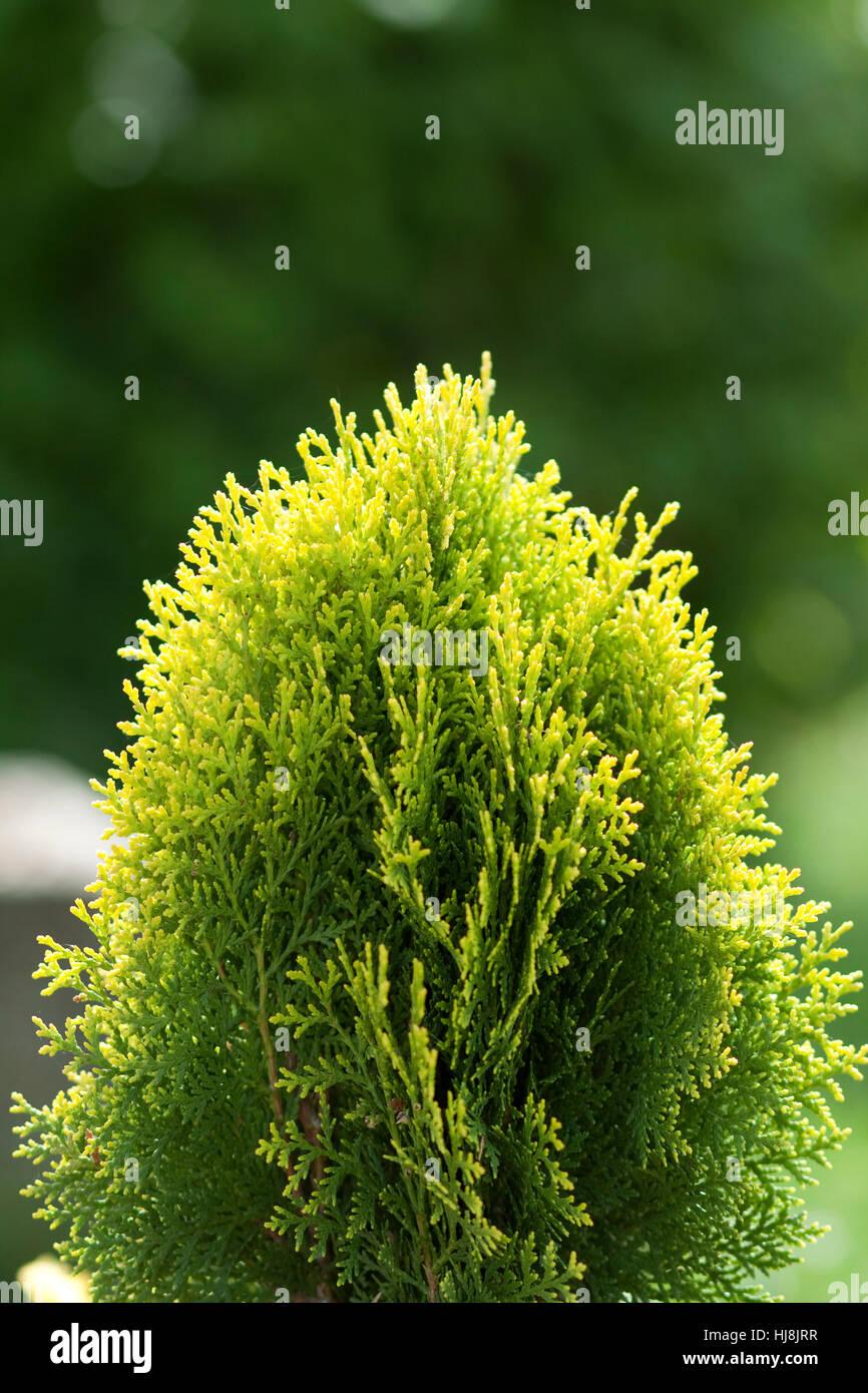 Grnpflanze Stockfotos & Grnpflanze Bilder Alamy