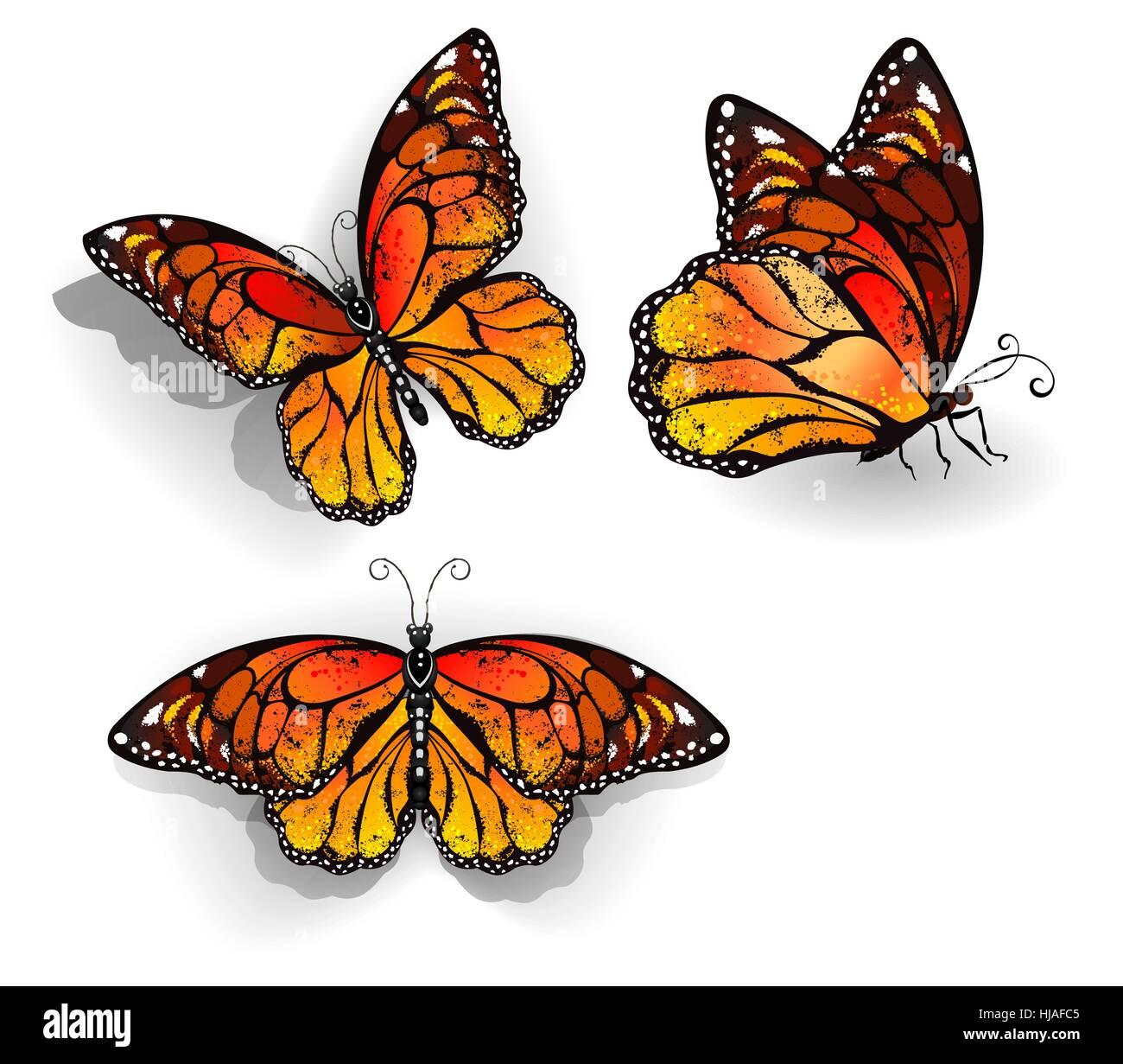 Beste Monarchfalter Lebenszyklus Färbung Seite Bilder - Beispiel ...