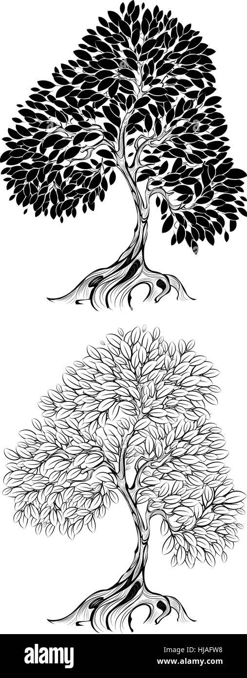 Bark Drawing Stockfotos & Bark Drawing Bilder - Seite 9 - Alamy