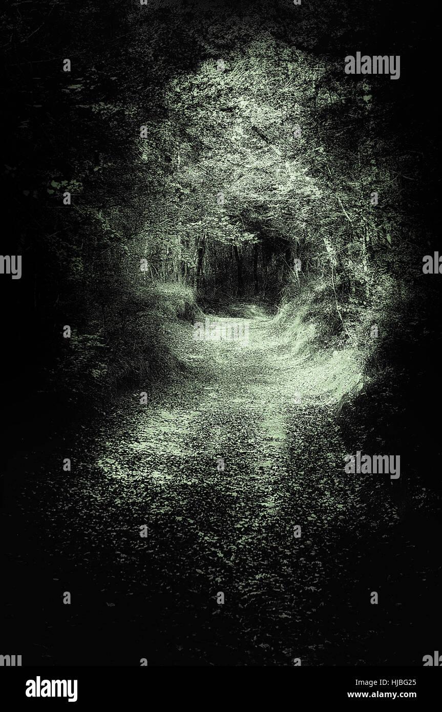 beängstigend Weg im dunklen Wald Stockbild