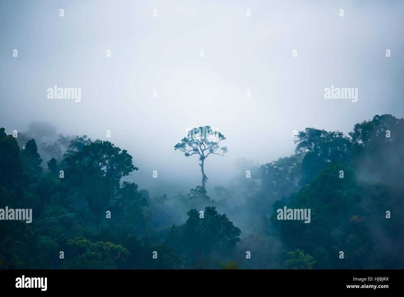 Der Baum so hervorragend in den Dschungel. Stockbild