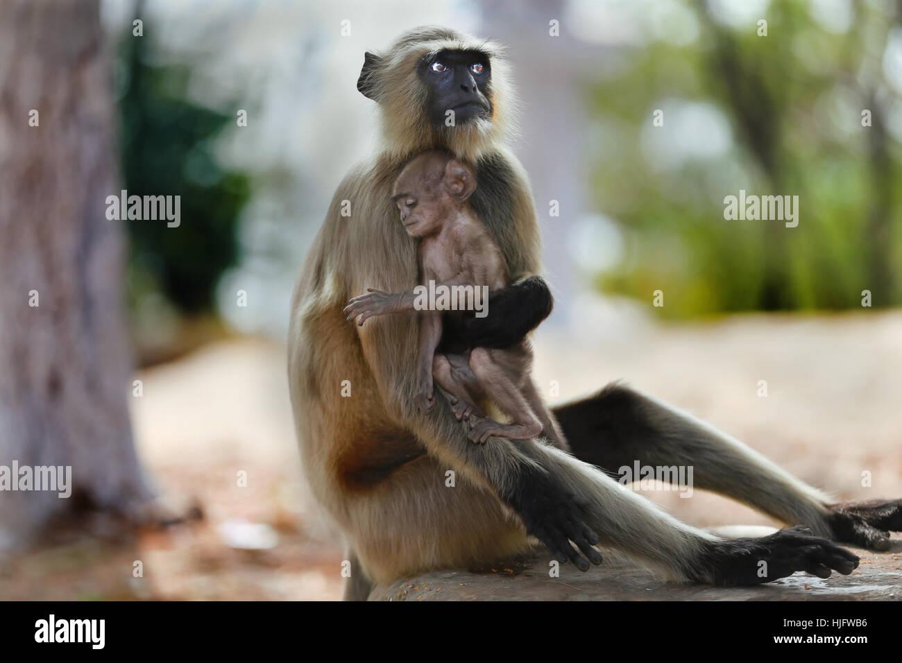Tierische Zärtlichkeit Stockbild