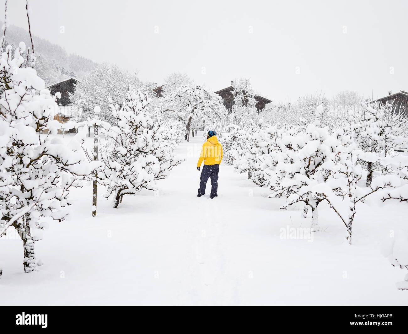 Mann mit gelben Winterjacke im Obstgarten, Winter, Schnee, Kolsass, Tirol, Österreich Stockbild