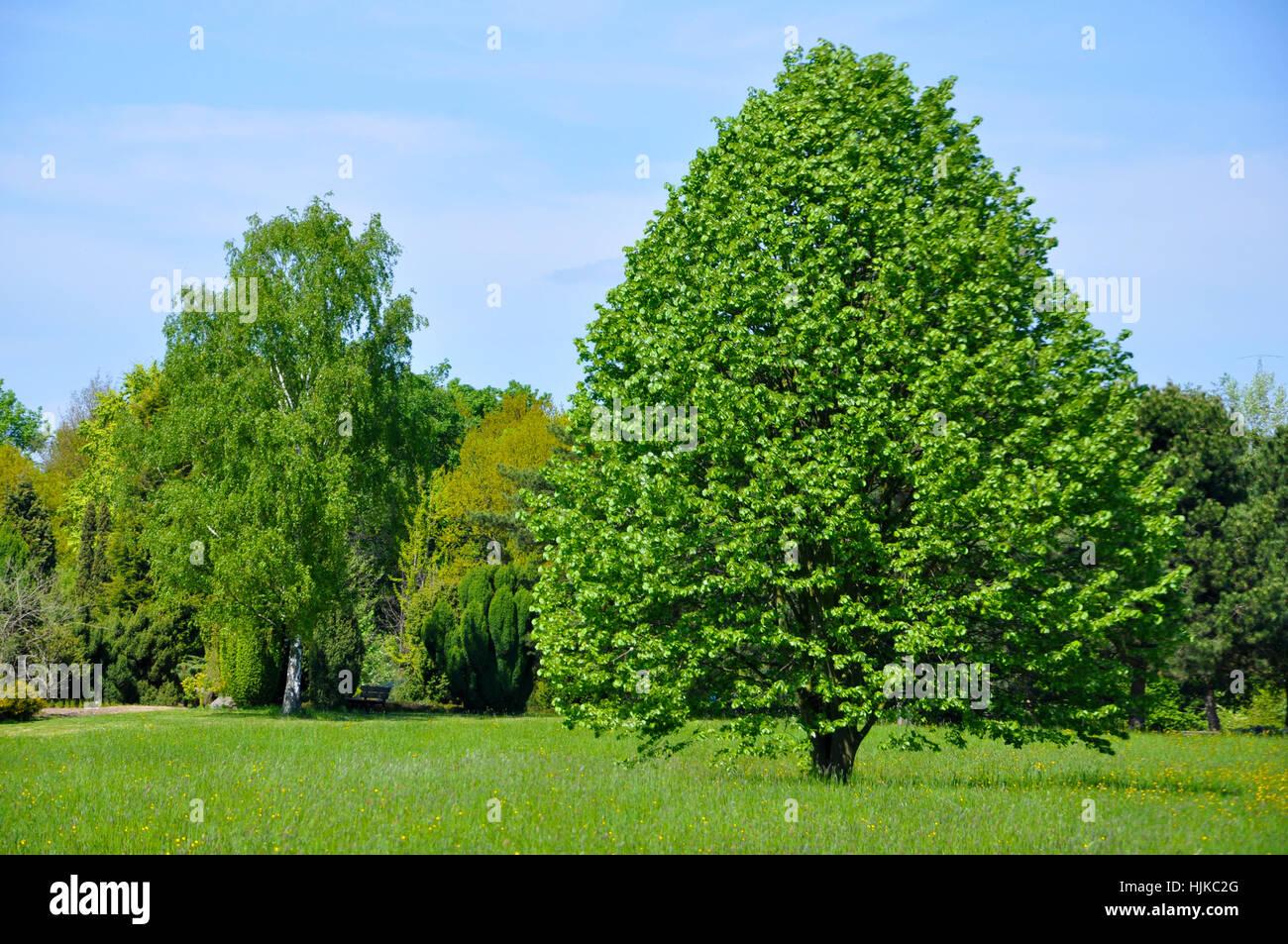Baum Bäume Park Garten Grün Büsche Frühling Parkway Gärten