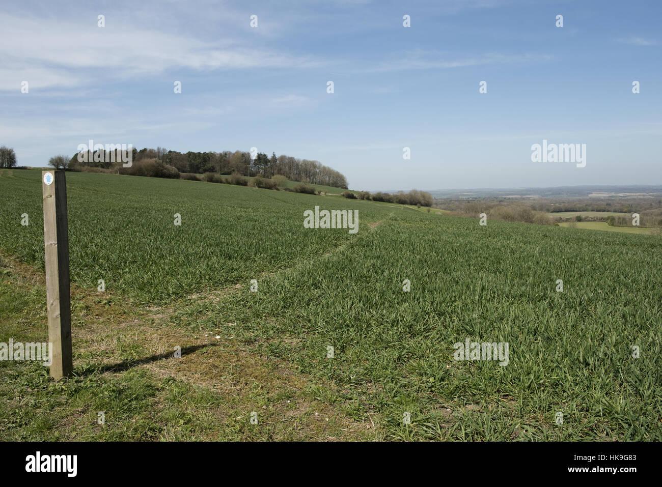 Wanderweg-Zeichen und Weg durch Phasen von Feldinhalten Winterweizen auf den Norden Wessex Downs im April Stockfoto