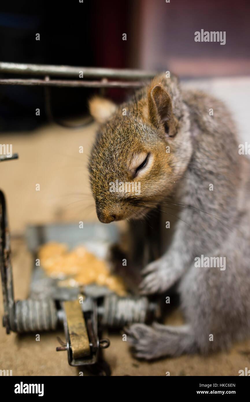 eichhörnchen in der wohnung