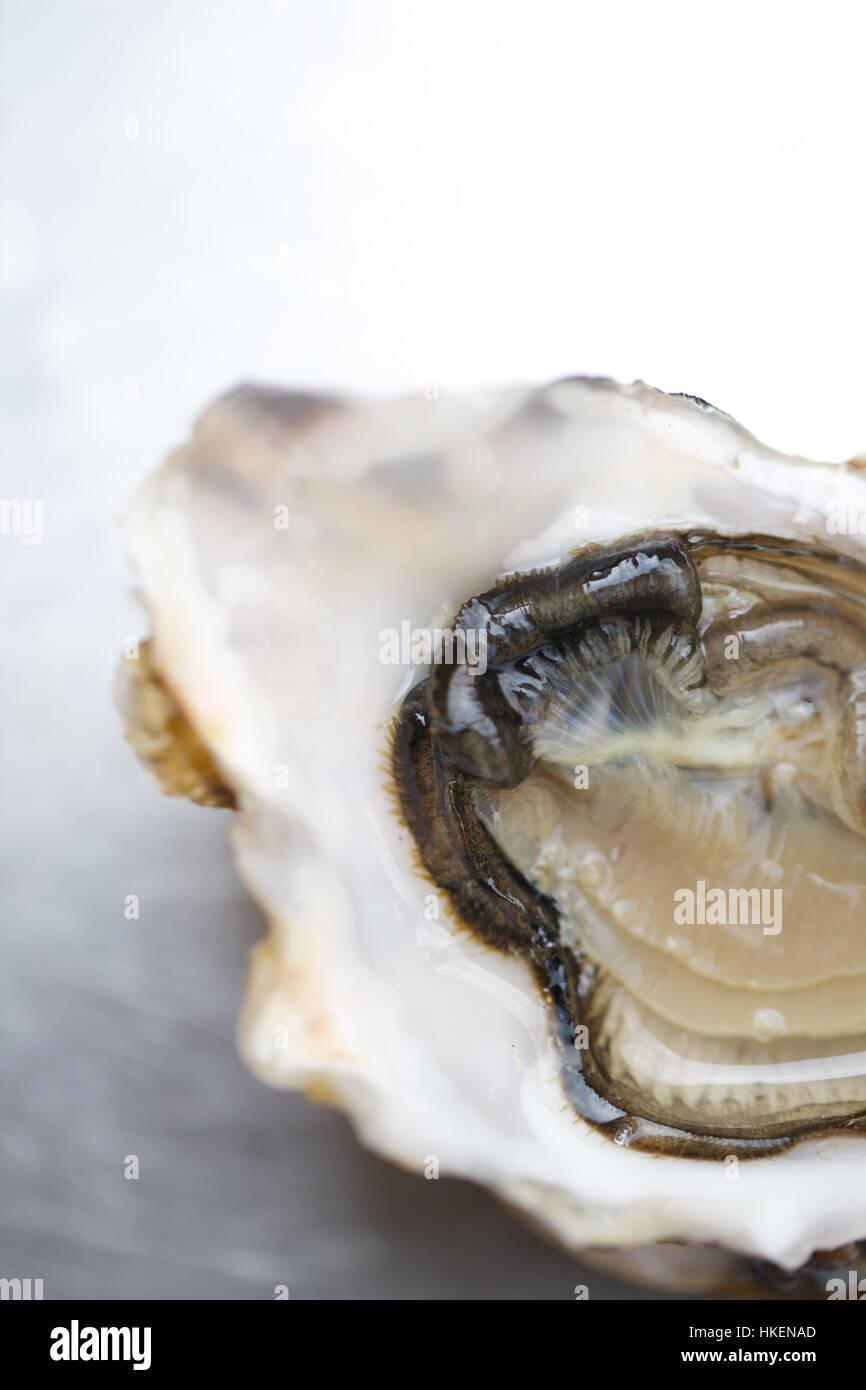 Nahaufnahme von frischen Austern. Fleisch, gesundes Essen, Essen trinken, Schalentiere. Stockbild