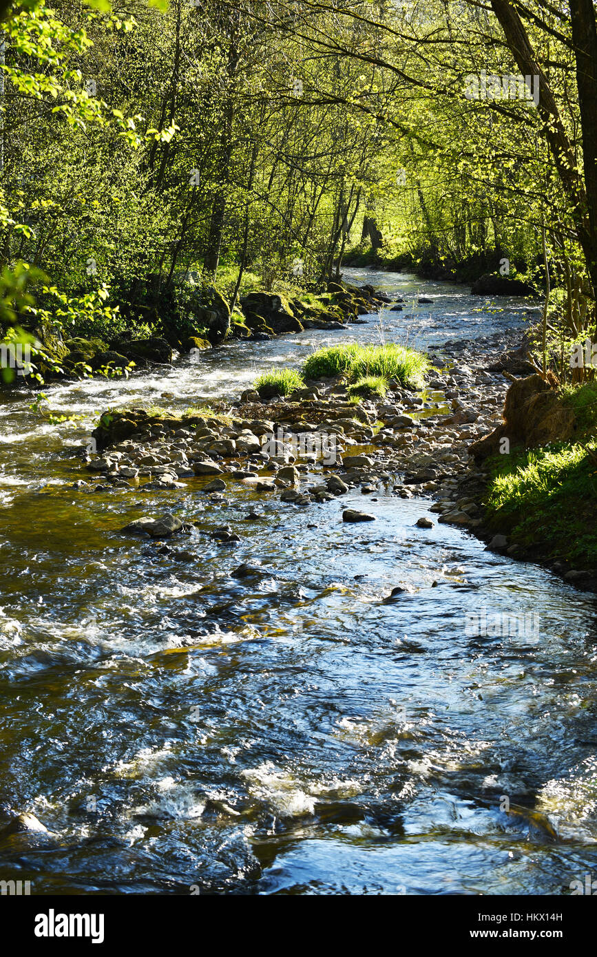 Eau Rouge, A klar Creek in den belgischen Ardennen Stockbild