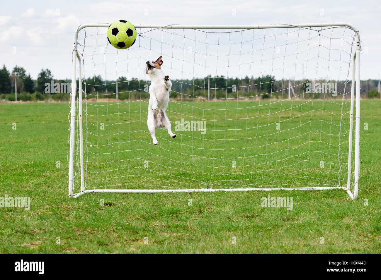Lustige übungen Fussball