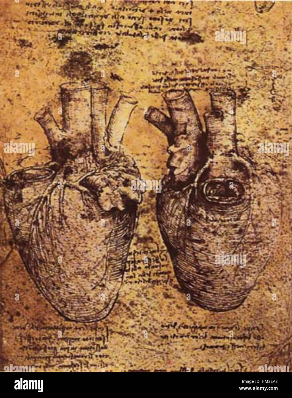 Leonardo da Vinci, Herz und die Blutgefäße Stockfoto, Bild ...