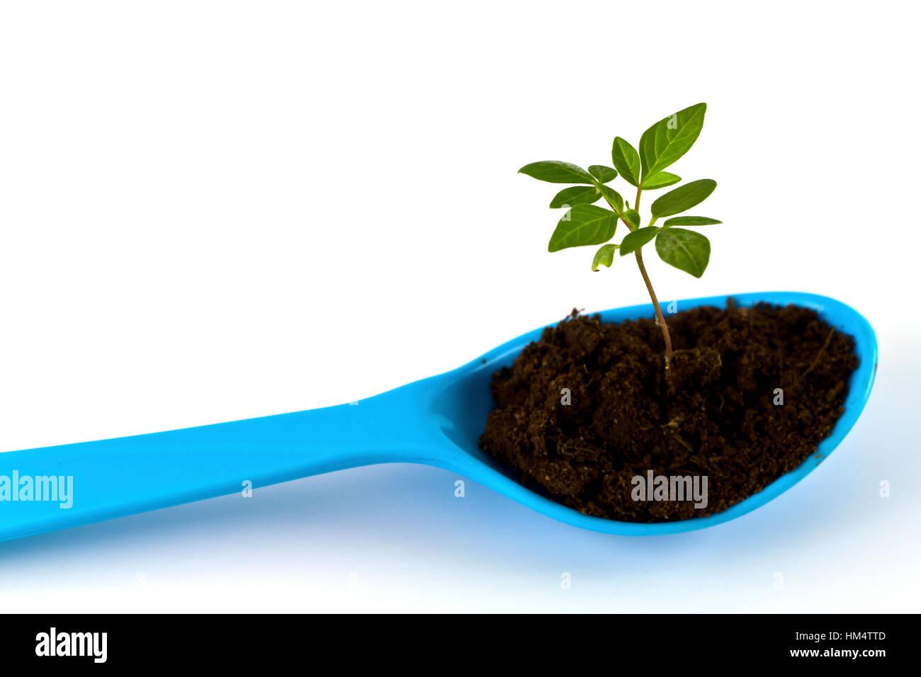 Wachsende grüne Pflanze auf Sppon isoliert auf weißem Hintergrund. Stockbild