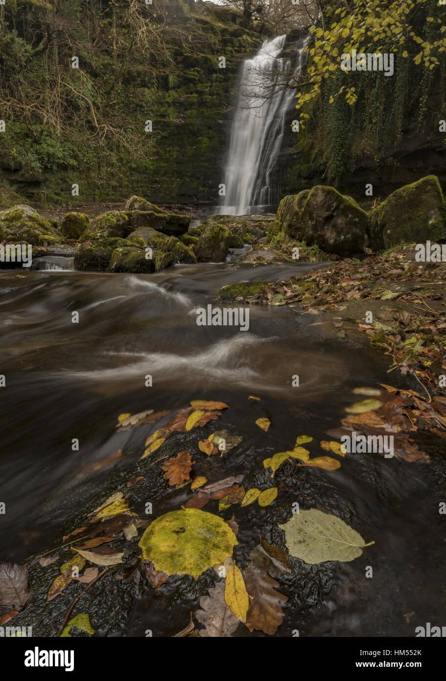 Einer der Blaen y Glyn Wasserfälle, auf dem Fluss Caerfanell, (Nebenfluss des Usk), mit abgefallenen Blättern; Brecon Beacons. Stockfoto