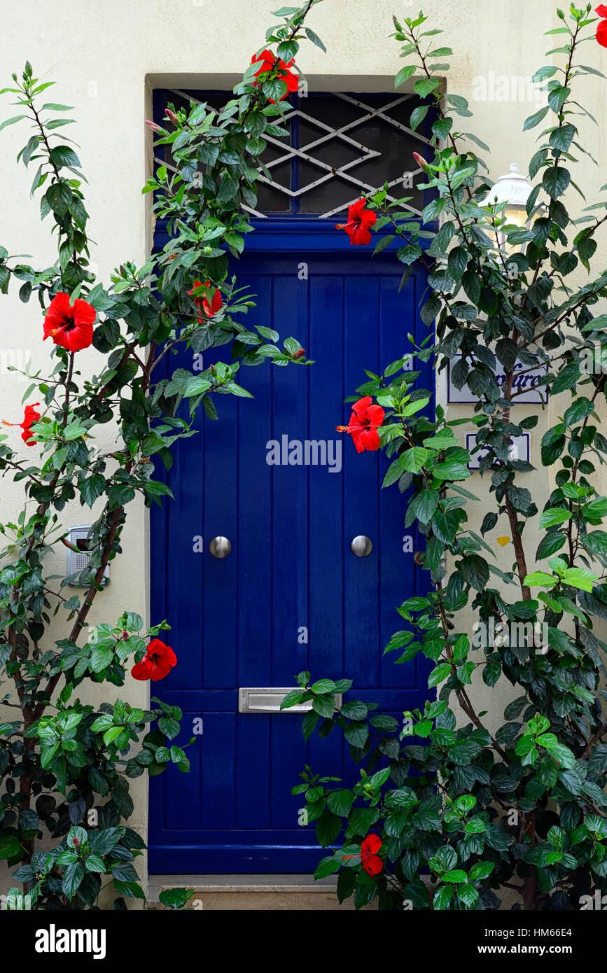 roter hibiskus blume blumen blüte blaue tür farbe farbe kombination
