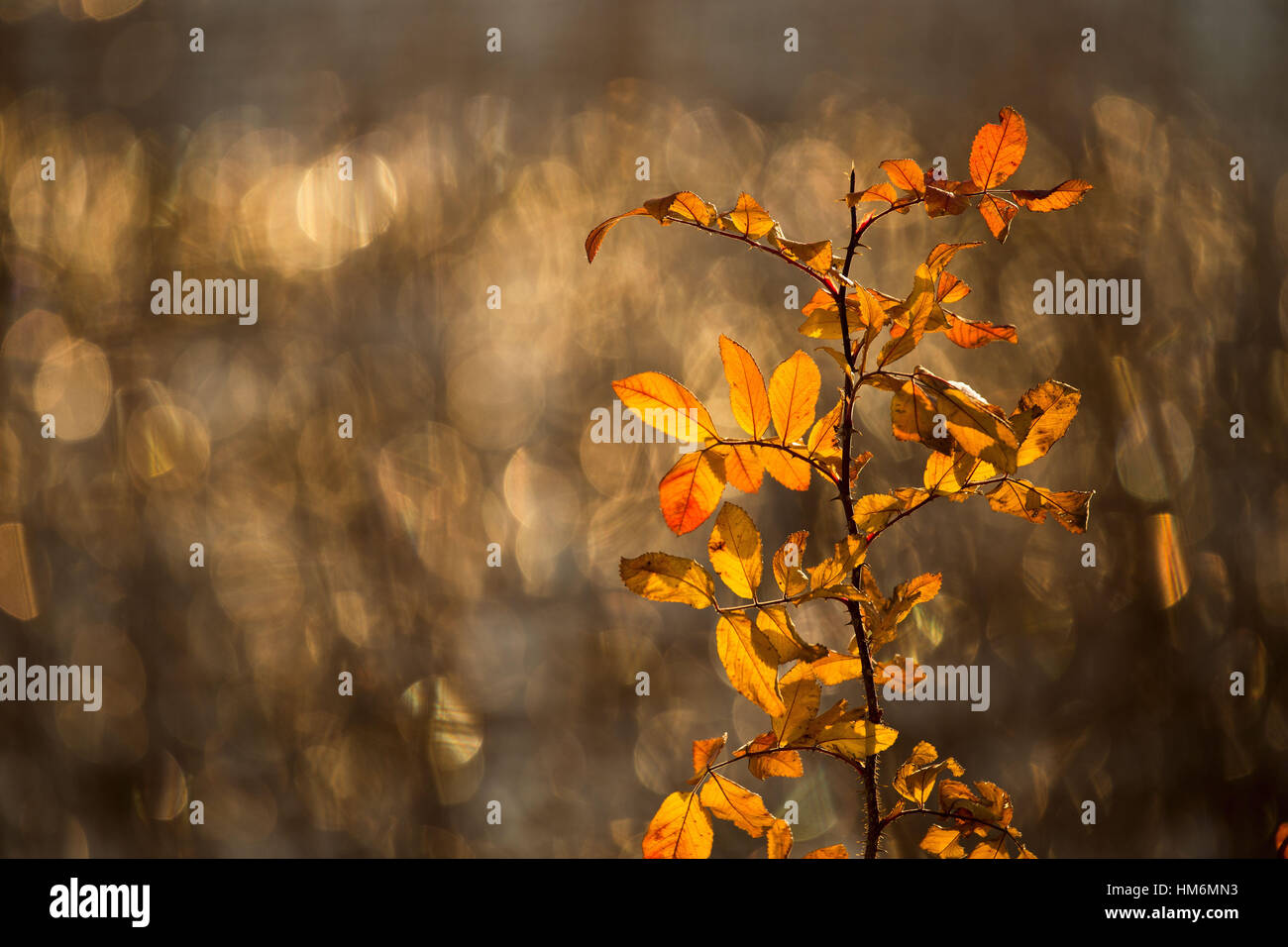 4 Season winter,beautiful,blurred,bokeh,breeze,closeup,cold,colorful,cool,crystal,december,dry,evening,Finland,flower,freeze,frost,frosty,hay,herbal,ice,icy,light,macro,Melancholie,melancholy,natural,nature,nobody,orange,plant,Romance,Romantik,rose Stockbild