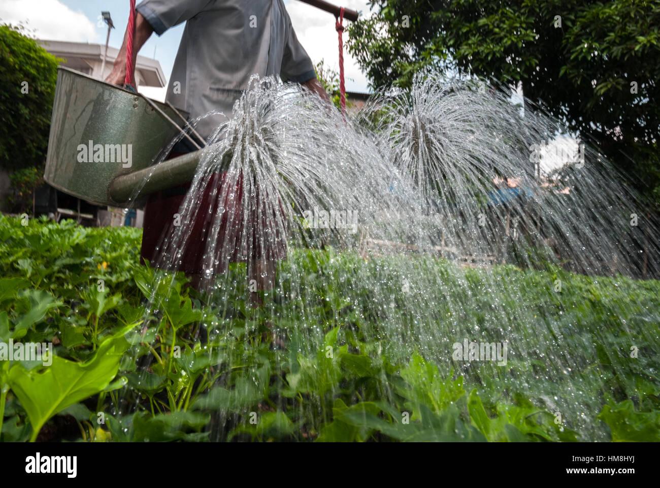 Mann, die Bewässerung von Pflanzen in einer Wohngegend in Jakarta, Indonesien. © Reynold Sumayku Stockbild
