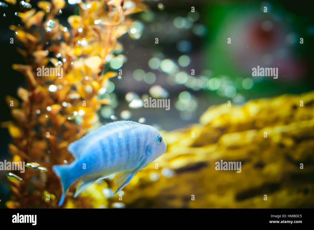 Pond fish rock stockfotos pond fish rock bilder alamy for Aquarium fische im teich