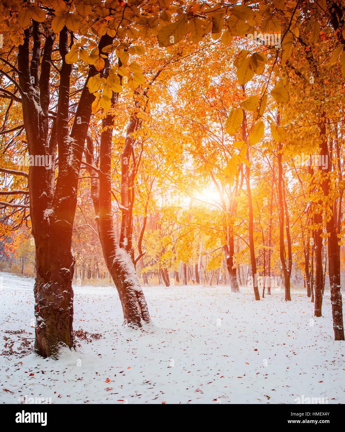Erster Schnee im Wald Stockfoto