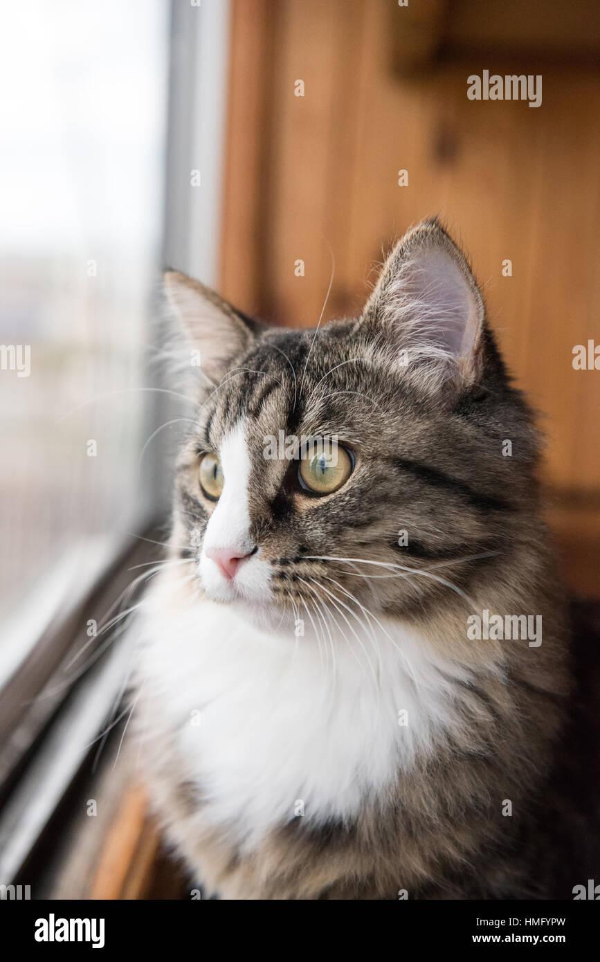 Katze Schaut Aus Dem Fenster Schone Katze Auf Der Fensterbank