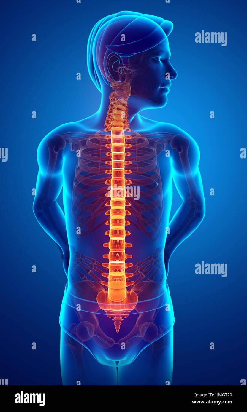 menschlichen Körper Anatomie mit Gelenkschmerzen Stockfoto, Bild ...