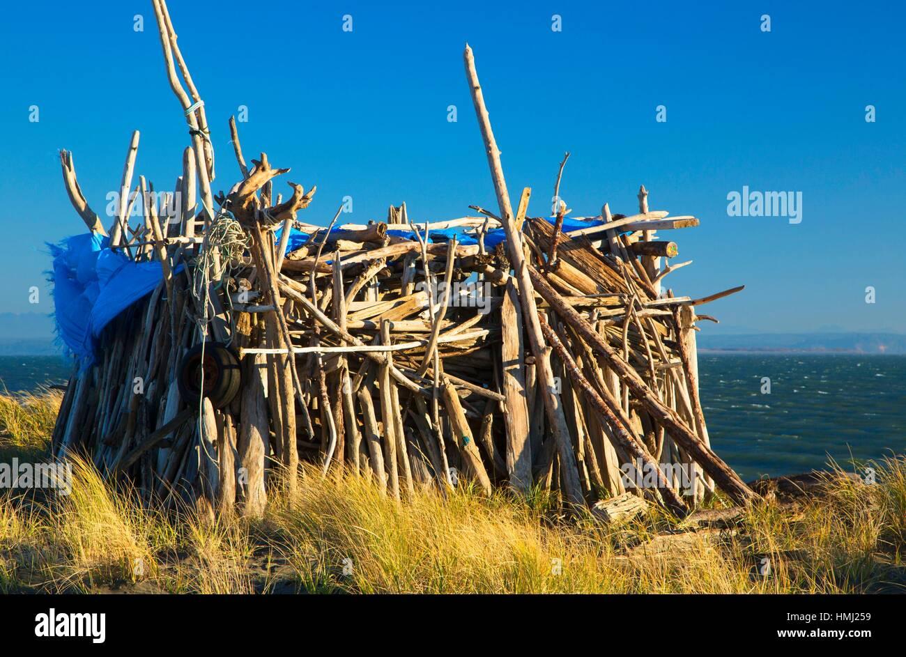 Strandmuschel, Damon Point State Park, Washington. Stockfoto