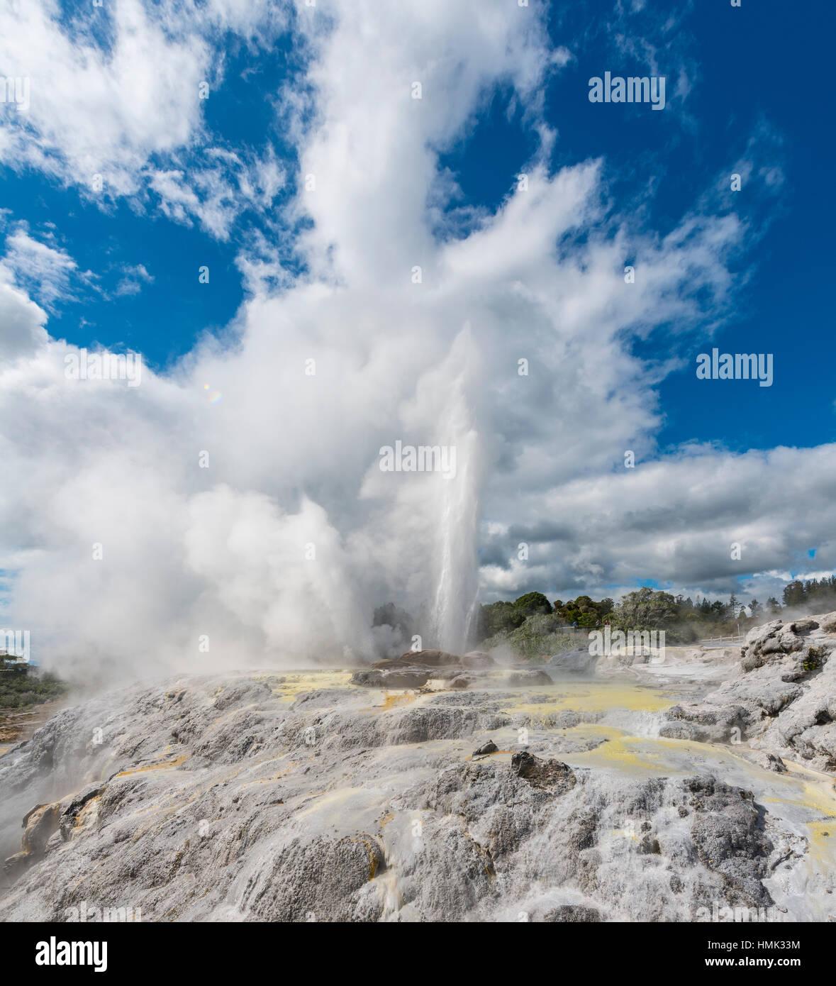 Wasser-Brunnen und Dampf, Te Puia, Whakarewarewa, Pohutu Geysir und Prince Of Wales Federn Geysir, Rotorua, Neuseeland Stockbild
