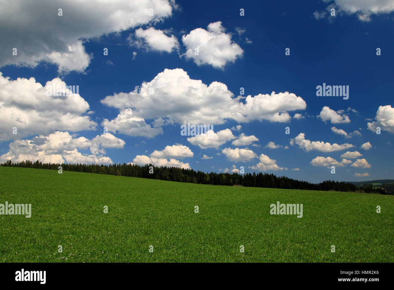 Schwarzwaldwanderung Unter Blauem Himmel Stockbild