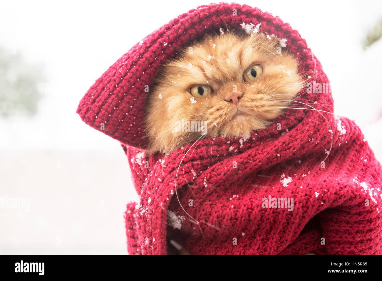 Stoppp schneit!!! Stockbild