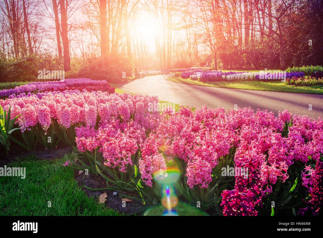 Blume Blumenbeete im Park. Stockbild