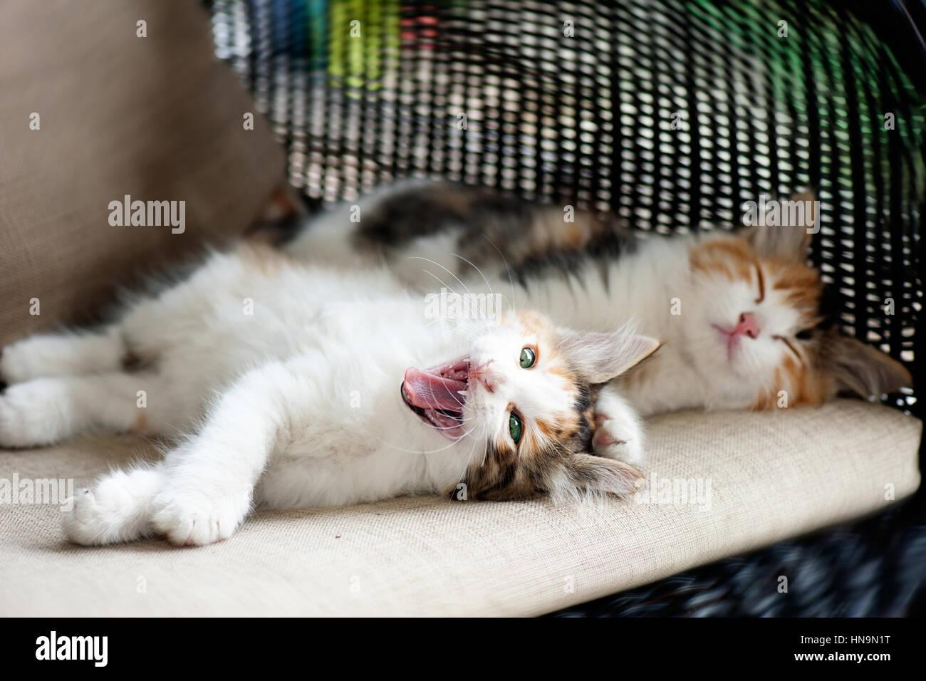 Schlaf und sleepy kitten Stockbild