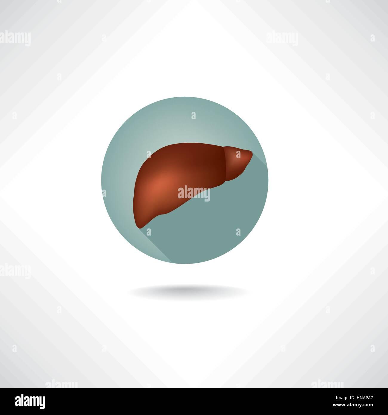 Leber Symbol. der menschlichen Anatomie Web Buttons gesetzt Vektor ...
