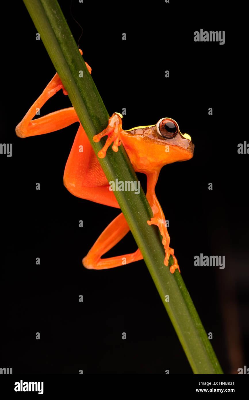 Nett Frosch Färbung Bilder Ideen - Malvorlagen Ideen - blogsbr.info