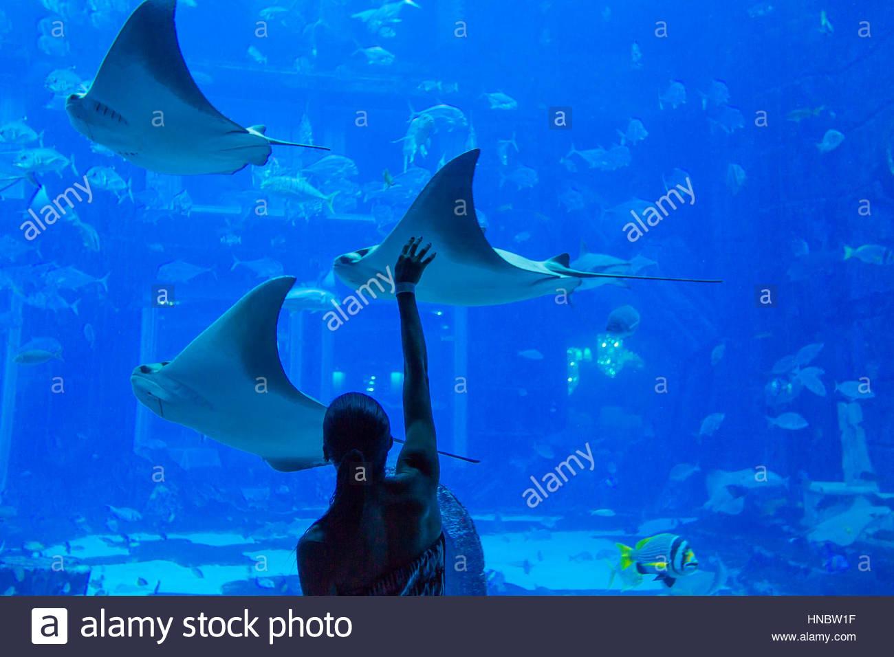 Eine Frau für ein Stachelrochen am Lost Chambers, ein Unterwasser-Meeresaquarium voller Meeresleben im Atlantis Stockbild