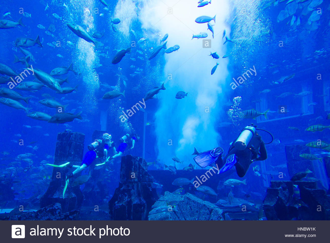 Taucher im Tank bei Lost Chambers, Unterwasser Meeresaquarium voller Meeresleben im Atlantis Palm Resort. Stockbild