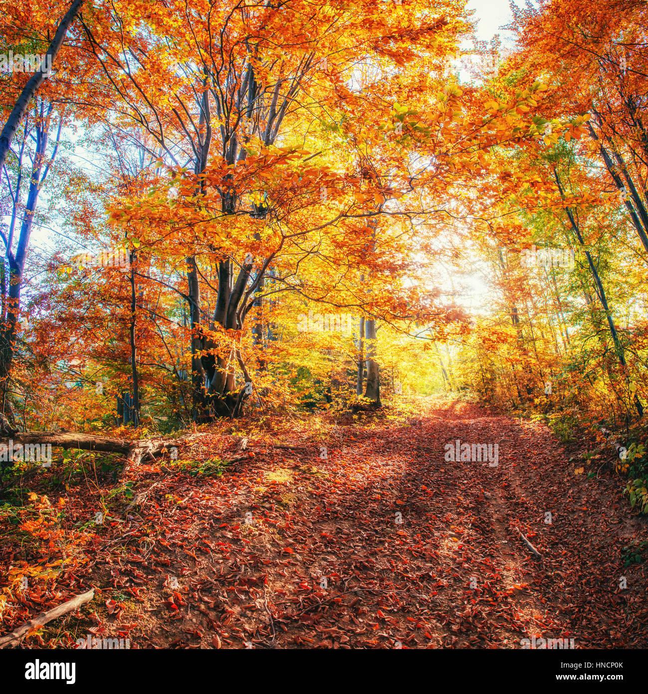 Waldweg im Herbst. Landschaft. Ukraine. Europa Stockbild