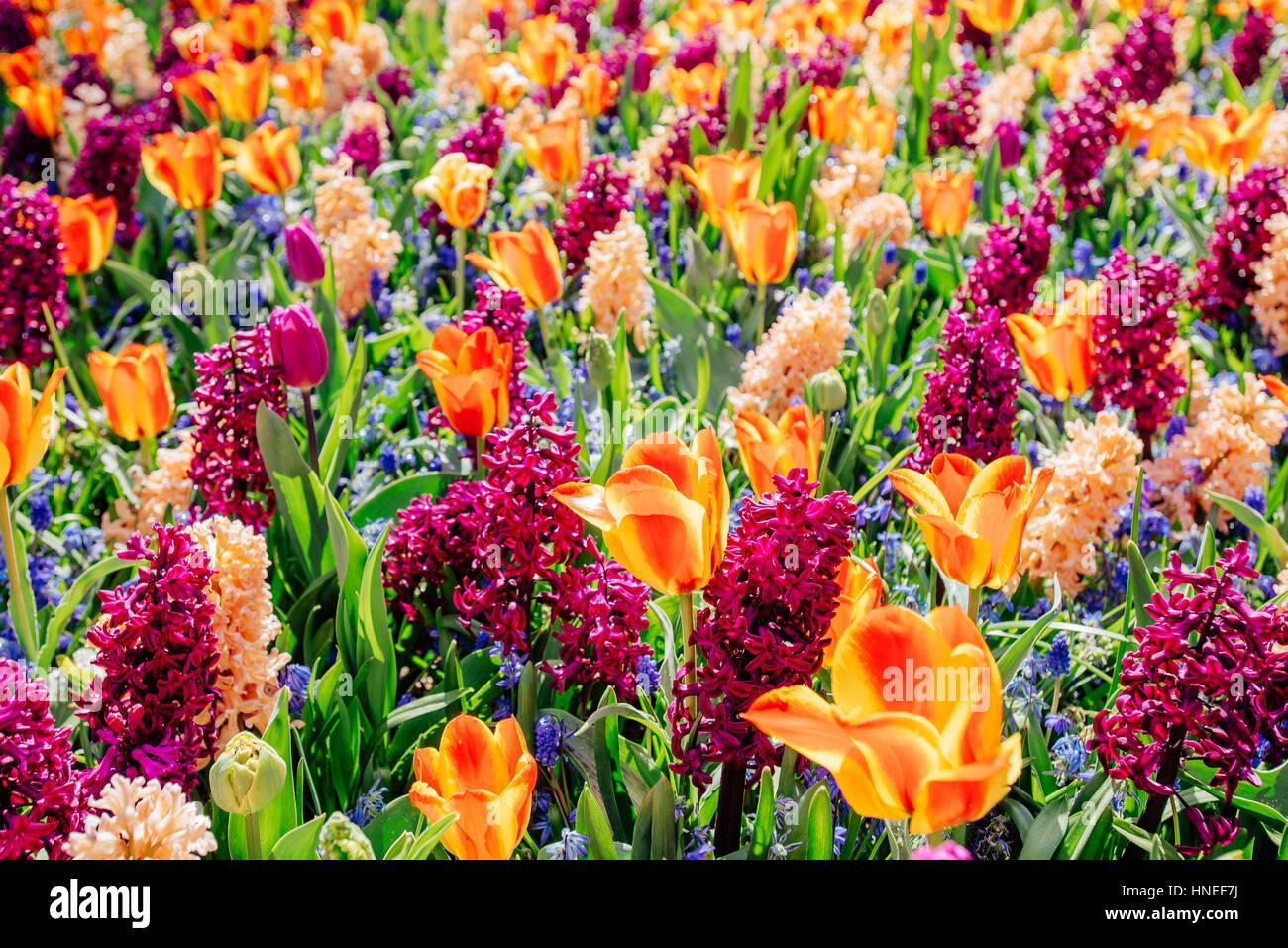 Bereich der wilden Blumen. Stockbild