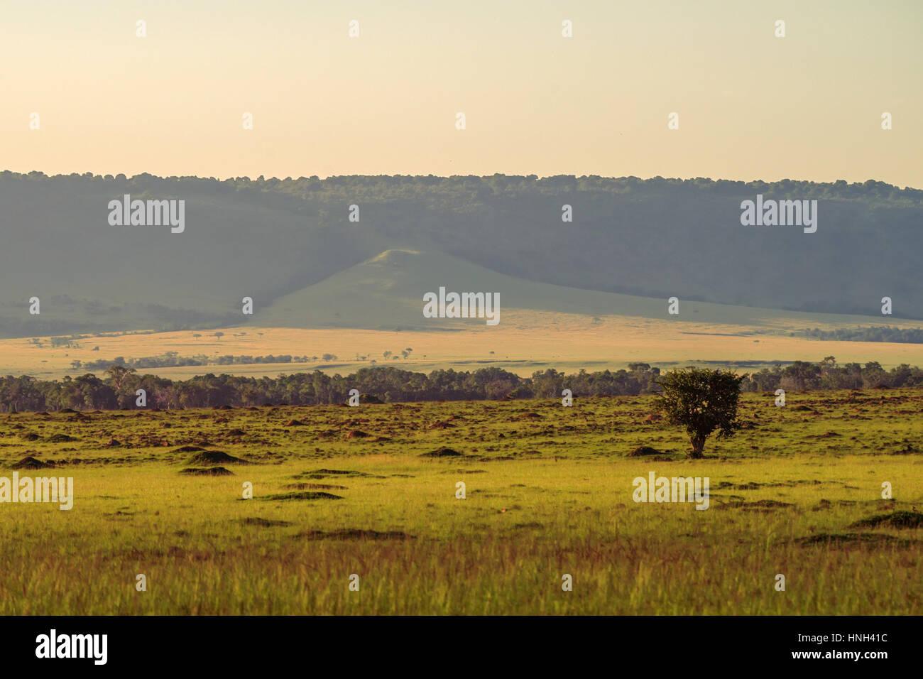 Landschaftlich reizvolle afrikanische Savannenlandschaft in der Masai Mara, Kenia Stockfoto