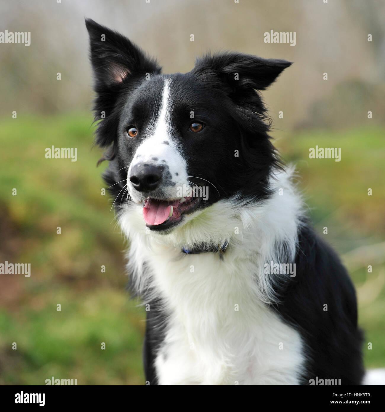 Schwarz Weiß Hund Stockfotos Schwarz Weiß Hund Bilder Alamy