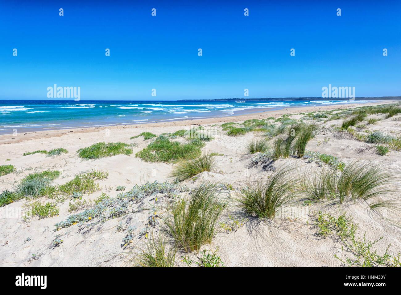 Sandstrand am Lake Conjola, Shoalhaven, South Coast, New-South.Wales, NSW, Australien Stockbild