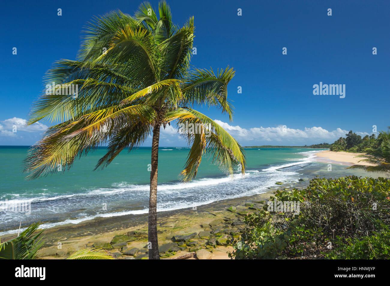 PALM TREE STRAND PLAYA PINONES LOIZA PUERTO RICO Stockbild