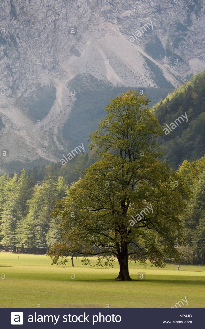 Die üppigen und unberührten Logarska Dolina oder Logar-Tal. Stockbild