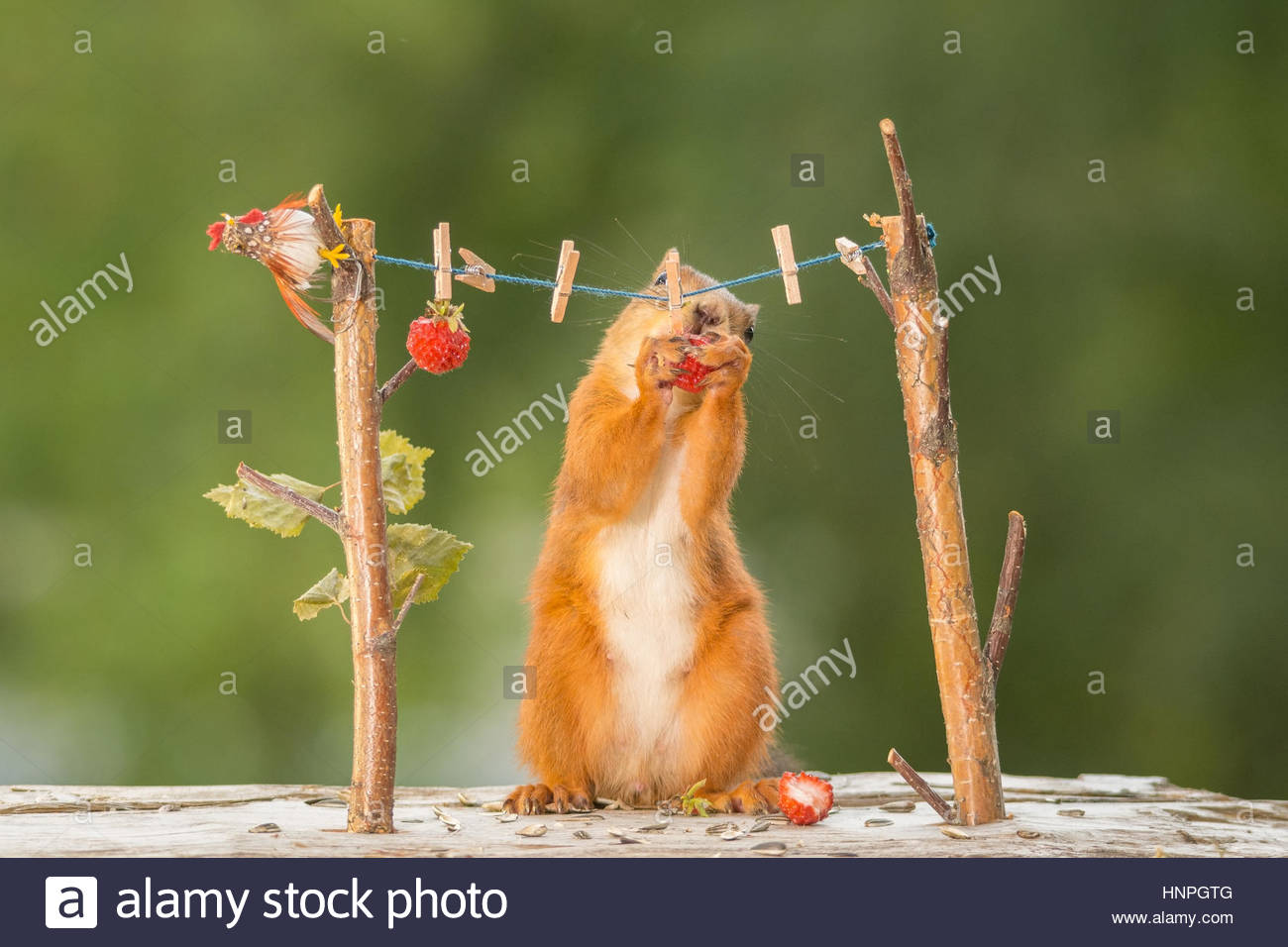 Charmant Eichhörnchen Kauen Drähte Bilder - Die Besten Elektrischen ...